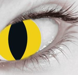 Wild Cat (1 Day Use) Eye Accessory